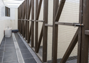 Close up of line of cattery runs