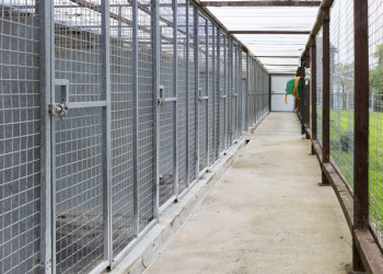 Kennels with exercise area